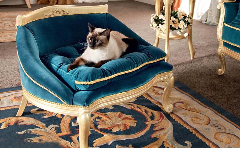 asortie kedi ve köpekler için puf