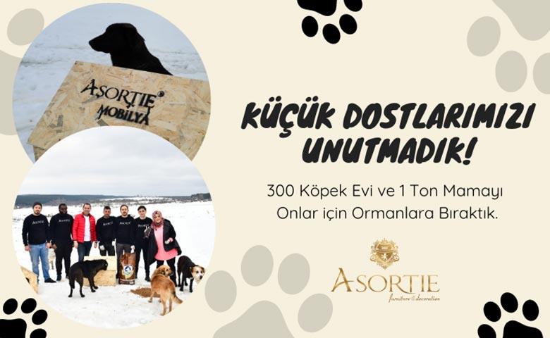asortie-geleneksel-sokak-hayvanlarina-yardim-kampanyasi-2021